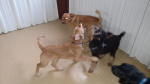 group of pets at pet lodges